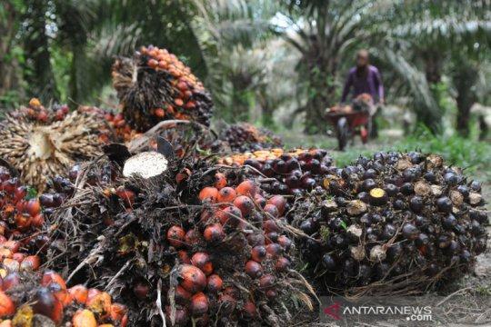 Airlangga : kelapa sawit berperan strategis dalam pembangunan ekonomi