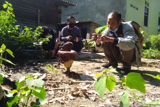 Bunga bangkai tumbuh di pekarangan rumah warga Tanjungpinang-Kepri