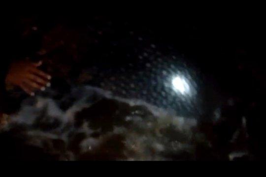 Seekor ikan paus terdampar di Pantai Bayem Tulungagung-Jatim