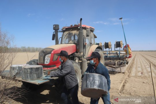 Petani kapas Xinjiang minim gunakan tenaga manusia