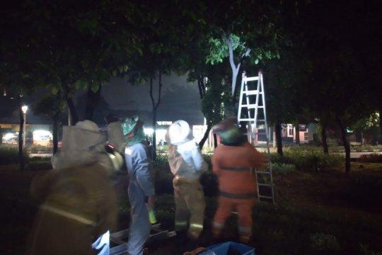 Damkar Jakarta Timur evakuasi sarang tawon di tiga lokasi berbeda