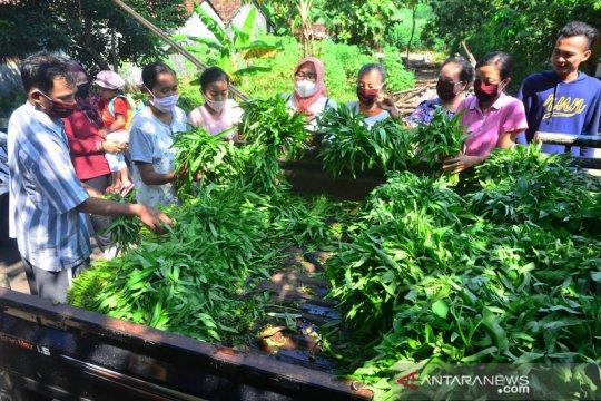 Berbagai sayuran segar gratis keliling kampung