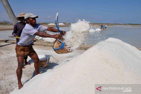 Pemerintah genjot pengembangan pabrik garam industri, kurangi impor