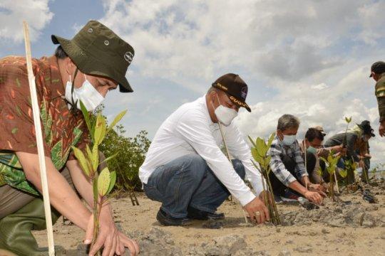 BRGM gandeng pemda dan LSM sinergi rehabilitasi mangrove