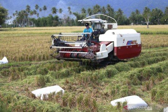 CIPS: Masalah lahan dan birokrasi hambat investasi pertanian
