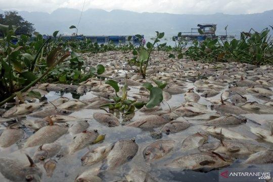10 ton ikan di Danau Maninjau mati massal