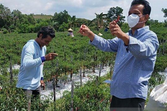 Anggota DPD dorong penguatan usaha budidaya cabai di Batam
