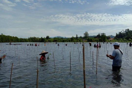 KKP rehabilitasi 20 hektare lahan mangrove di Aceh Jaya