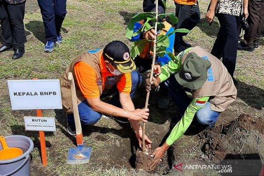 BNPB: Indonesia butuh jutaan pohon untuk ditanam di pantai