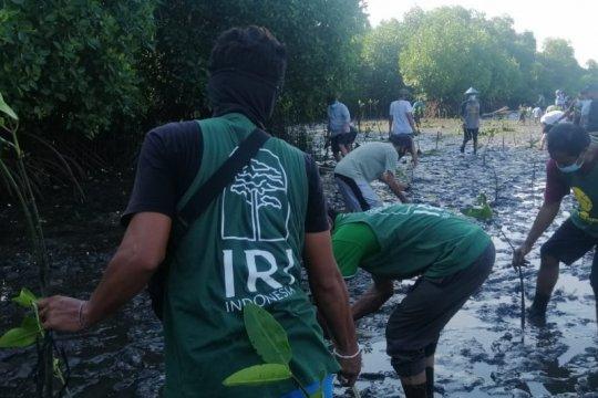 Membangun kembali eco-wisata mangrove di Bali