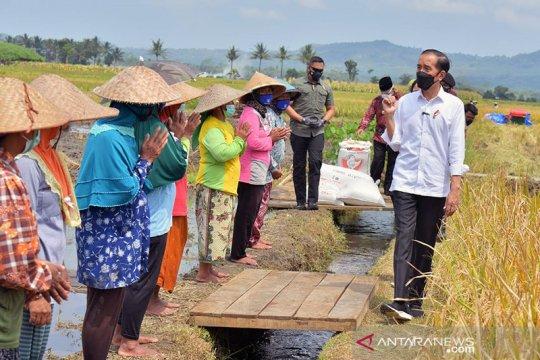 Presiden Jokowi pastikan produksi padi penuhi kebutuhan masyarakat