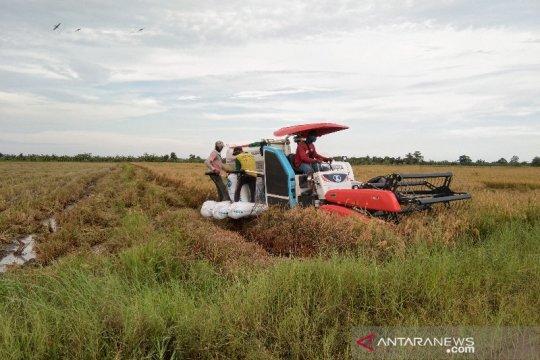 Penyuluh pertanian dinilai elemen penting tingkatkan ketahanan pangan