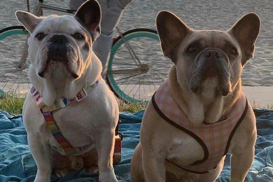 Kelompok penculik anjing kesayangan Lady Gaga ditangkap