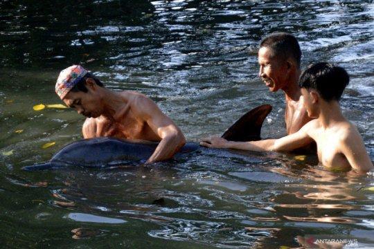 Seekor lumba-lumba terdampar di tambak ikan