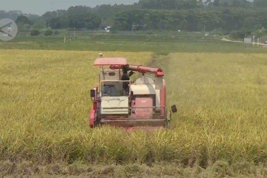 Mengintip pertanian nirawak di China selatan
