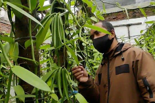 Temanggung kembangkan vanili pada program tani pekarangan