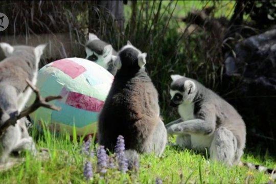 Keseruan pesta Paskah di Kebun Binatang Zagreb