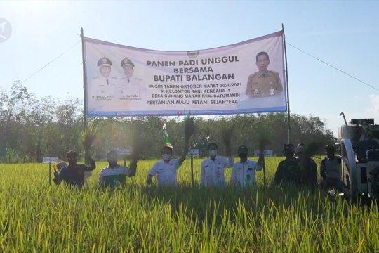 Bupati Balangan pimpin prosesi panen raya padi unggul