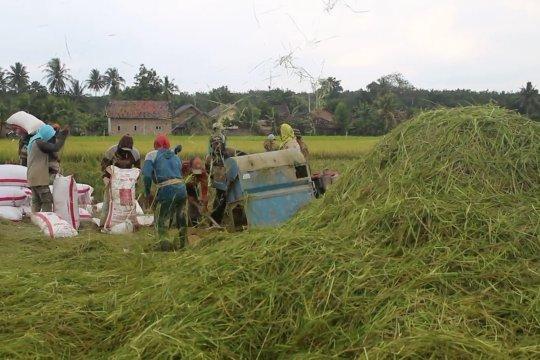 Sumsel targetkan serap hasil panen petani 700 ton per hari