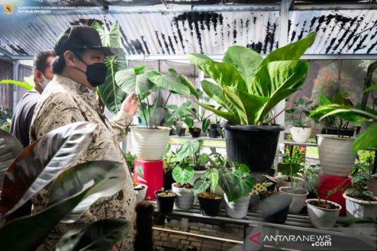 Airlangga minta ekspor tanaman hias penuhi ceruk pasar dunia