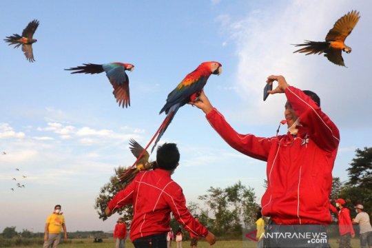 """Komunitas penggemar burung """"free flight"""""""