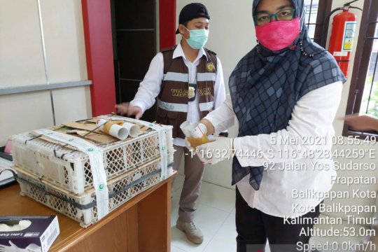 Karantina Pertanian Balikpapan gagalkan penyelundupan 16 cucak ijo