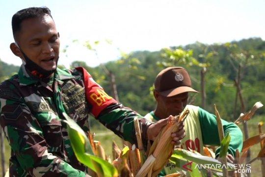 TNI AD ubah penanam ganja jadi petani jagung