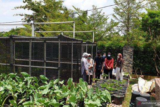 1.000 penyuluh pertanian, upaya Sumsel bangkitkan sektor pertanian