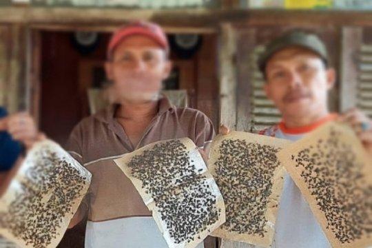 Wali nagari jelaskan soal ribuan lalat yang ganggu warga Koto Tingga