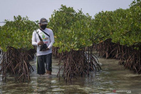 Yayasan KAN: Alih fungsi lahan rusak hutan mangrove
