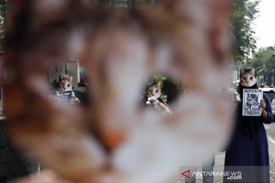 Aksi peduli kucing jalanan
