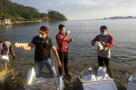 KKP lepasliarkan 134.990 benih lobster di Sumatera Barat