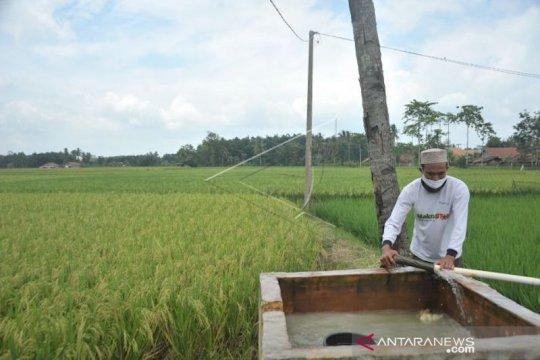 PLN pasok listrik di sejumlah desa sentra produksi perikanan Sumsel