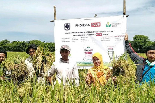 Mega Eltra perluas pasar pupuk komersial di Sulawesi