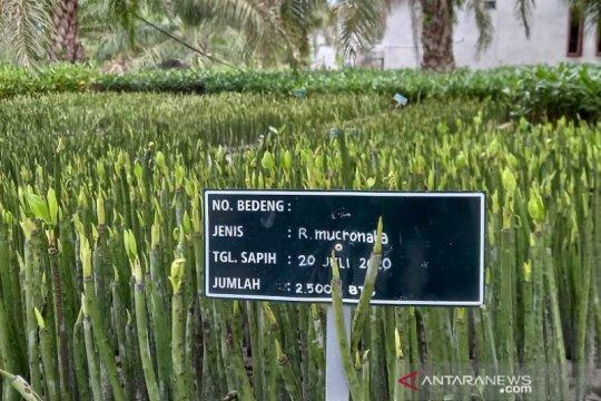 Dirjen KSDAE: Hutan sosial Indonesia terbesar di dunia