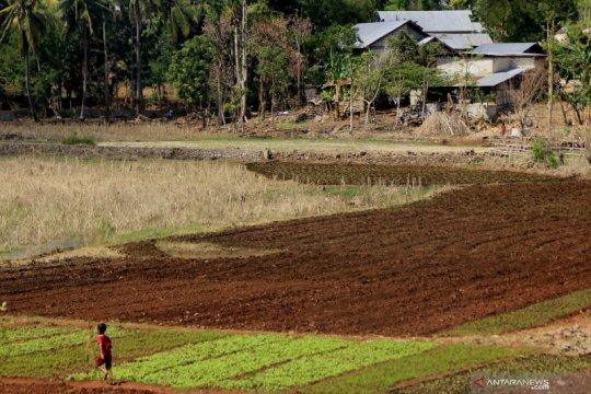 Danau yang terbentuk akibat Siklon Seroja mengering