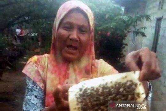 Serbuan lalat dikeluhkan warga Pulau Galang Kota Batam