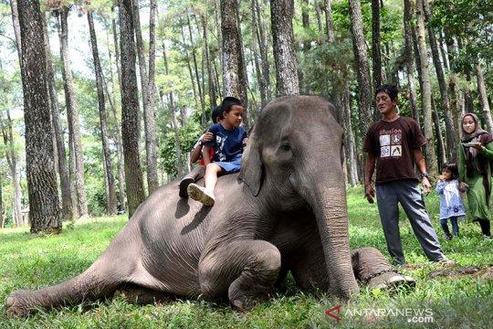 Taman wisata alam Punti Kayu Palembang sudah dibuka lagi