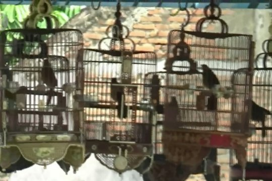 Memulihkan ekonomi dari lomba burung berkicau