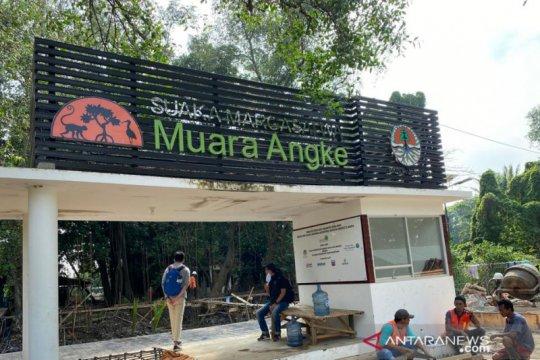 YKAN dan BKSDA Jakarta kolaborasi rehabilitasi mangrove SM Muara Anke