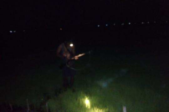 Hama tikus serang puluhan hektare bibit padi di Tulungagung