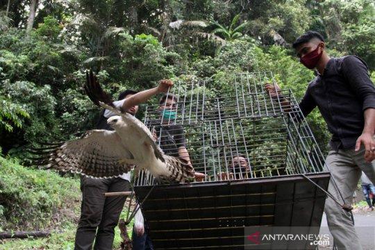 Pelepasliaran elang dan kukang ke hutan cagar alam Maninjau