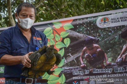 Sambut Hari Lingkungan, BBKSDA Riau lepasliarkan 33 satwa di Kampar