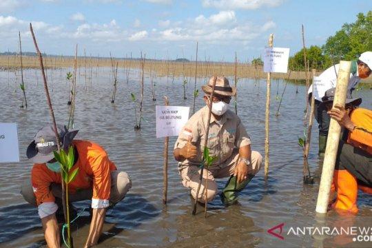 DLH Belitung tanam 100 bibit mangrove peringati hari lingkungan