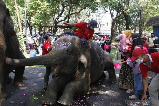 HUT gajah koleksi Solo Zoo