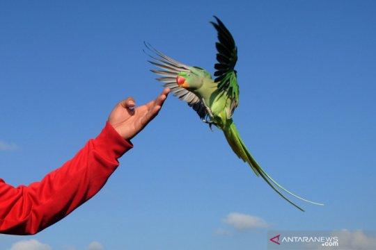 Kegiatan komunitas pecinta burung paruh bengkok