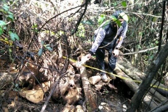 Polisi selidiki penemuan bangkai gajah di Mukomuko