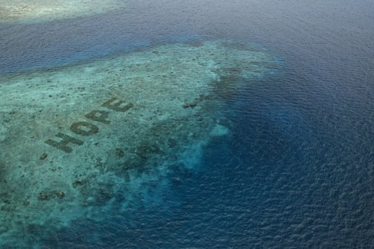 Hope Reef libatkan masyarakat restorasi terumbu karang lewat film