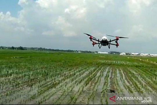 DKPP Probolinggo gunakan drone untuk semprot hama dan penyakit