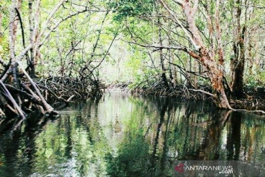 KKP tangani lahan kritis pesisir Kalsel dengan tanam mangrove